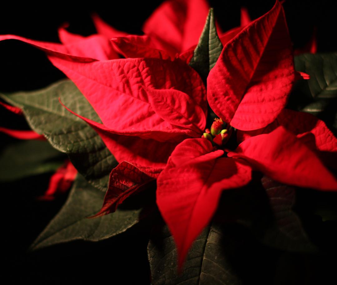 Julebord i Jessheim hos Gamle Nabo